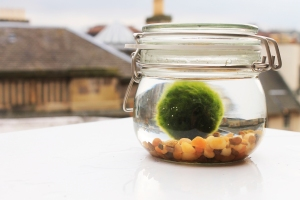 Medium Marimo Terrarium - £7.99